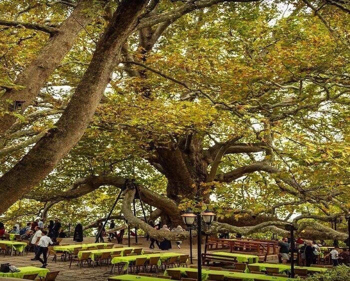 bursa-inkaya-old-tree-tour